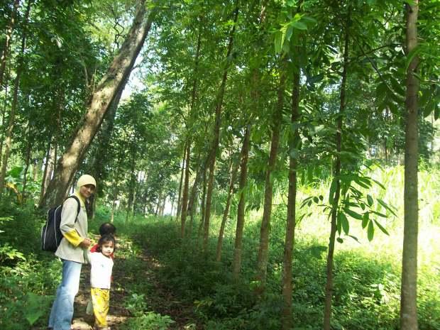 Hutan Adalah Halaman Bagi Mereka