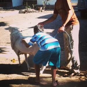 Riang Gembira Menuntun Si Embek Hasil Menabung