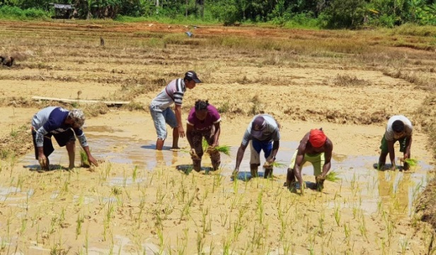 Memanfaatkan lahan untuk pertanian